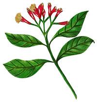 Black Pepper (Fruit) (BioPerine)